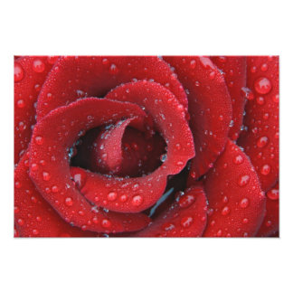 Dew covered red rose decorating grave site in art photo