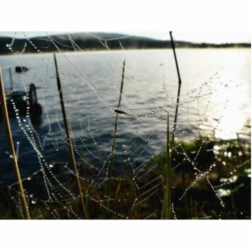 Dew Covered Spider Web Above Water Standing Photo Sculpture