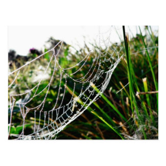 Dew Covered Spider Web On Grass Post Cards