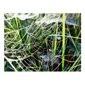Dew Covered Spider Web Postcards