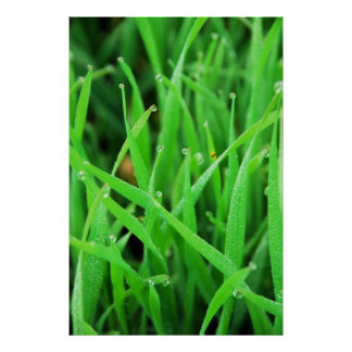 Dew Crowned Grass Posters