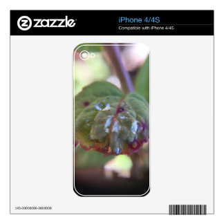 Dew Decals For iPhone 4