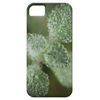 Dew Drop iPhone SE/5/5s Case