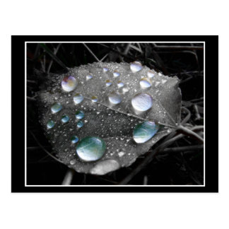 Dew Drop Leaf Postcard