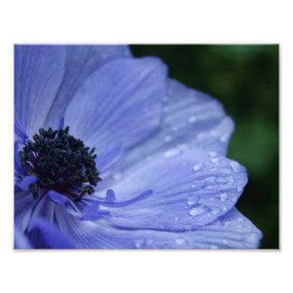 Dew Drop Petals 11 x 8.5 Photographic Print