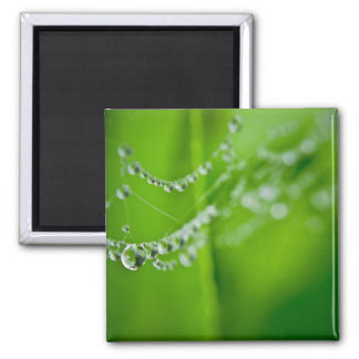 Dew Drops 2 Inch Square Magnet