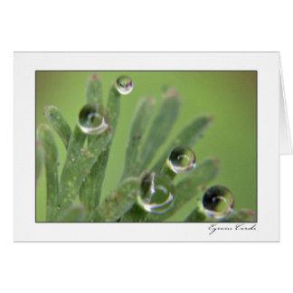 Dew Drops Card