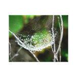 Dew Drops I Stretched Canvas Print