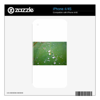 Dew Drops iPhone 4S Decal