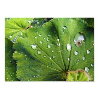 Dew Drops On A Leaf Card