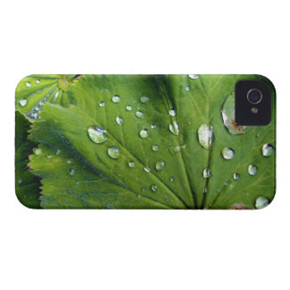 Dew Drops On A Leaf Case-Mate iPhone 4 Case