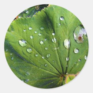 Dew Drops On A Leaf Classic Round Sticker