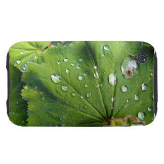 Dew Drops On A Leaf iPhone 3 Tough Case