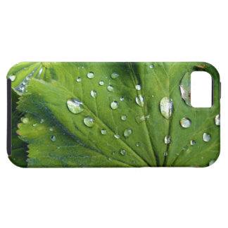 Dew Drops On A Leaf iPhone SE/5/5s Case