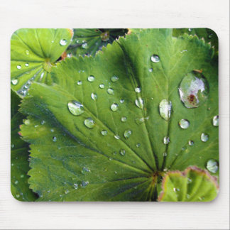 Dew Drops On A Leaf Mouse Pad
