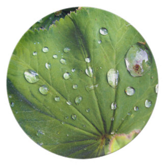 Dew Drops On A Leaf Plate