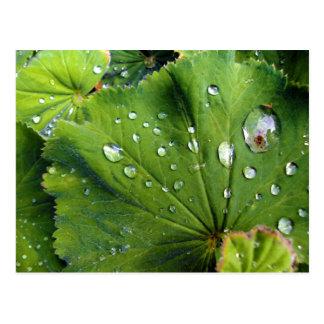 Dew Drops On A Leaf Postcard