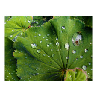 Dew Drops On A Leaf Poster