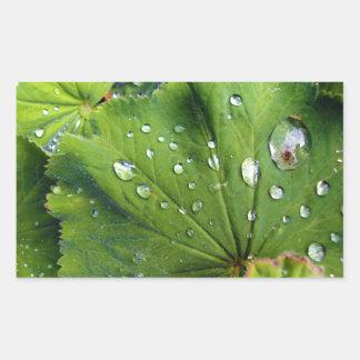 Dew Drops On A Leaf Rectangular Sticker
