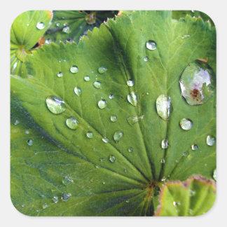 Dew Drops On A Leaf Square Sticker
