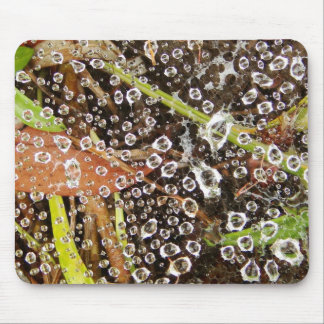 Dew Drops on a Spider Web Mouse Pad