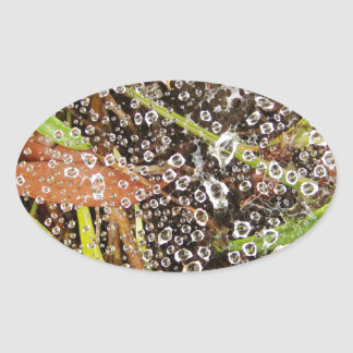 Dew Drops on a Spider Web Oval Stickers