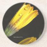 Dew Drops on a Yellow Daisy - Coaster