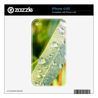 Dew Drops on Green Eucalyptus Leaf Skin For The iPhone 4