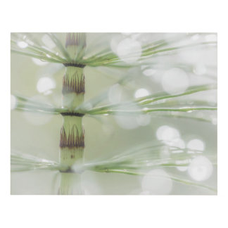 Dew Drops on Horsetail Plant | Seabeck, WA Panel Wall Art