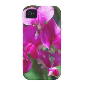 Dew Drops on Sweet Pea Vibe iPhone 4 Cover