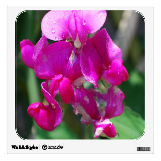 Dew Drops on Sweet Pea Wall Graphic