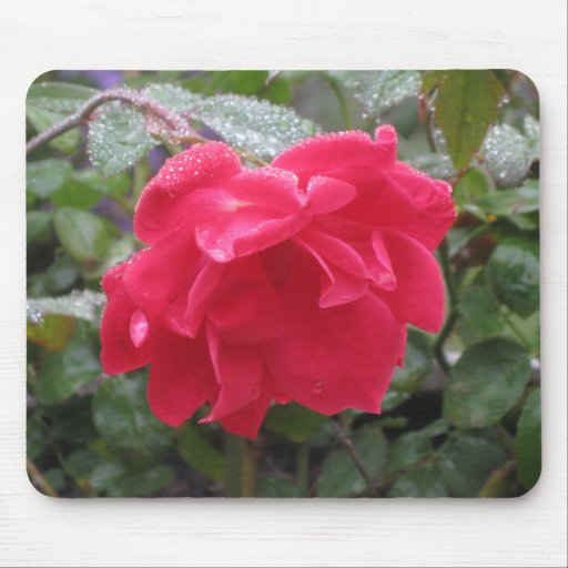 DEW KISSED KNOCK OUT RED ROSE mousepad