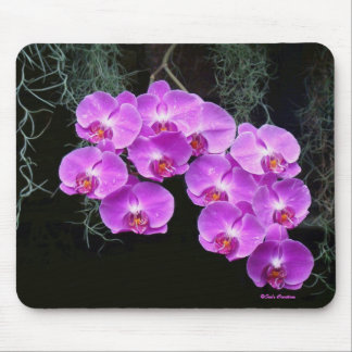 Dew-Kissed Orchids Mouse Pad