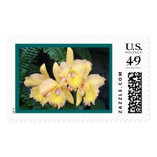 Dew Kissed Orchids Postage