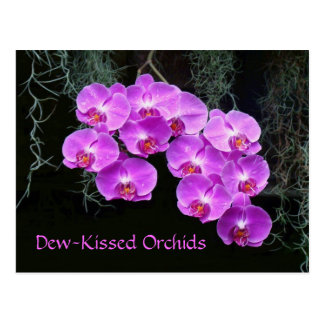Dew-Kissed Orchids Postcard