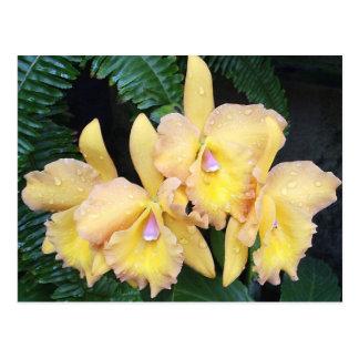 Dew Kissed Orchids Postcard