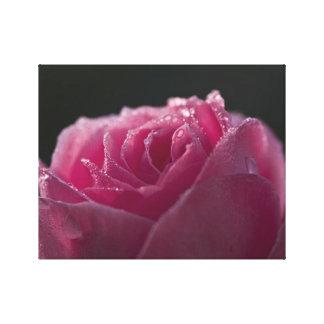 Dew Kissed Pink Rose Canvas Print