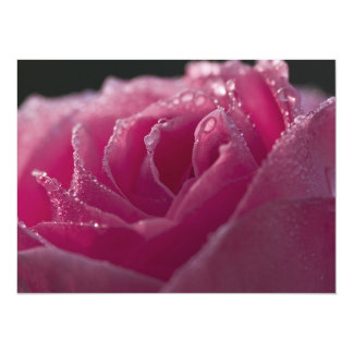 Dew Kissed Pink Rose 5.5x7.5 Paper Invitation Card