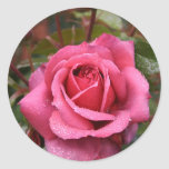 Dew Kissed Pink Rose Round Stickers