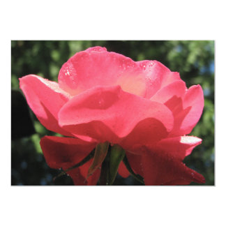 Dew Kissed Rose Card