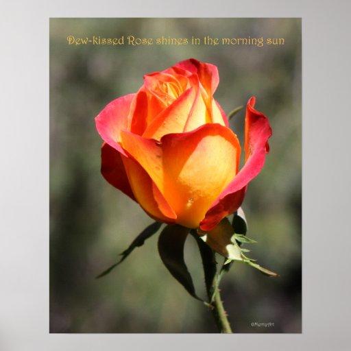 Dew-kissed Rose Poster 16x20 ROSE & PROSE