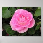 Dew Kissed Rose Print