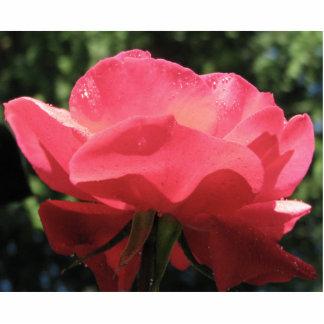 Dew Kissed Rose Statuette