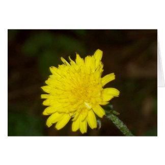 Dew on a Dandelion Card