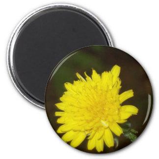 Dew on a Dandelion Magnet