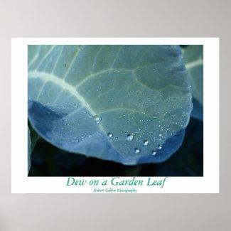 Dew on a Garden Leaf print