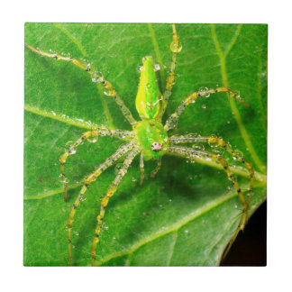 Dew on a Green Lynx Spider Ceramic Tile