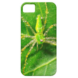 Dew on a Green Lynx Spider iPhone SE/5/5s Case