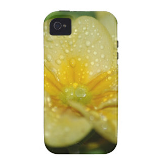 Dew on a Primrose iPhone 4 Covers