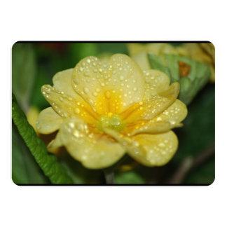 Dew on a Primrose 5x7 Paper Invitation Card